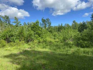 Photo 6: 38 Stewart Road in Lyons Brook: 108-Rural Pictou County Vacant Land for sale (Northern Region)  : MLS®# 202011938