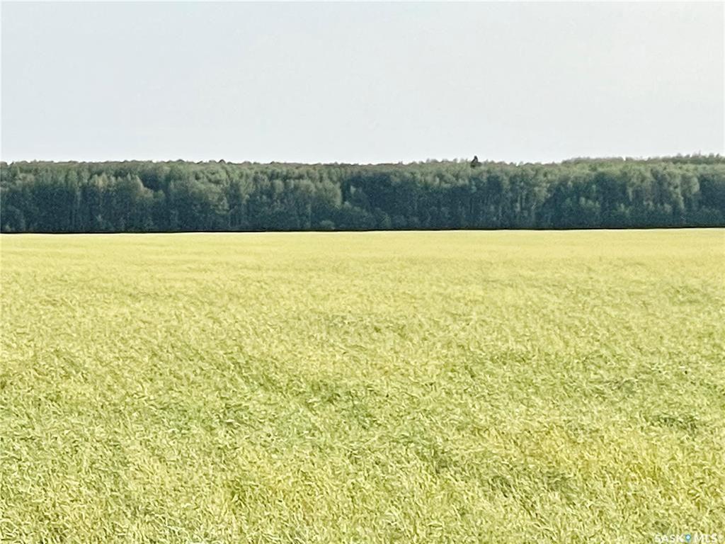 Main Photo: RM 486 5 Quarter Land in Moose Range: Farm for sale (Moose Range Rm No. 486)  : MLS®# SK867716