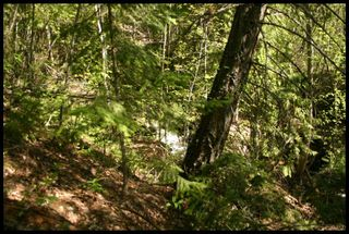 Photo 15: 21 6500 Southwest 15 Avenue in Salmon Arm: Panorama Ranch Vacant Land for sale : MLS®# 10230290