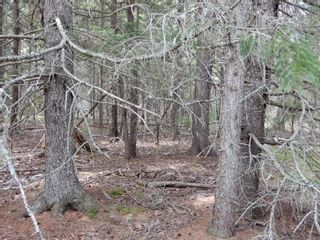 Photo 2: Pictou Landing Road in Pictou Landing: 108-Rural Pictou County Vacant Land for sale (Northern Region)  : MLS®# 202118660