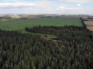 Photo 3: TWP 593 and RR 212: Rural Thorhild County Rural Land/Vacant Lot for sale : MLS®# E4259030