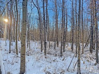 Photo 14: 31 Grove Lane in Rural Rocky View County: Rural Rocky View MD Residential Land for sale : MLS®# A1097684