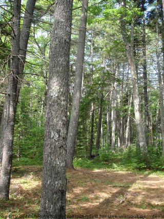 Photo 15: Lot 11 RAFUSE POINT Road in Pleasantville: 405-Lunenburg County Vacant Land for sale (South Shore)  : MLS®# 202100151
