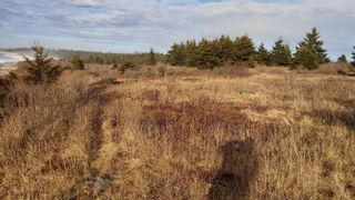 Photo 9: Lot 8 Youngs Road in East Green Harbour: 407-Shelburne County Vacant Land for sale (South Shore)  : MLS®# 202022907