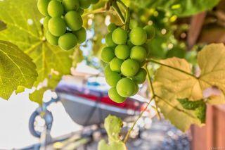 Photo 45: 1253 Gardener Way in : CV Comox (Town of) House for sale (Comox Valley)  : MLS®# 850175
