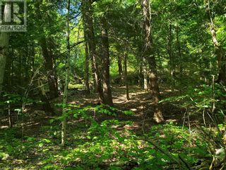 Photo 17: 8801 SEVERN RIVER in Orillia: Vacant Land for sale : MLS®# 40120545