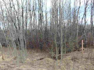Photo 8: 81 15065 TWP RD 470: Rural Wetaskiwin County Rural Land/Vacant Lot for sale : MLS®# E4240270