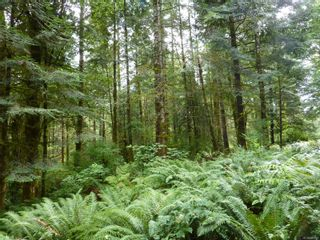 Photo 13: SL 16 950 HERIOT BAY Rd in : Isl Quadra Island Land for sale (Islands)  : MLS®# 853701