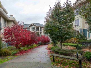 """Photo 35: 203 255 ROSS Drive in New Westminster: Fraserview NW Condo for sale in """"GROVE AT VICTORIA HILL"""" : MLS®# R2527121"""