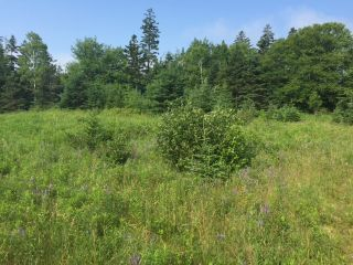 Photo 6: LOT 100ABC WEST PETPESWICK Road in West Petpeswick: 35-Halifax County East Vacant Land for sale (Halifax-Dartmouth)  : MLS®# 5158270