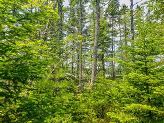 Photo 16: Lot 101 Dorey Mills Road in Clearland: 405-Lunenburg County Vacant Land for sale (South Shore)  : MLS®# 202119645