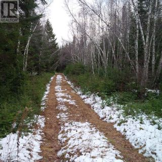 Photo 6: - Yourette Road in Dewolfe: Vacant Land for sale : MLS®# NB062662