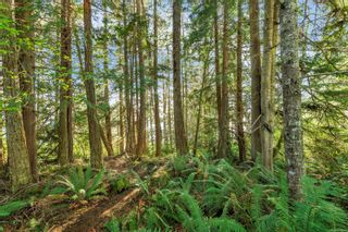 Photo 12: 2550 Seaside Dr in : Sk French Beach Land for sale (Sooke)  : MLS®# 873874