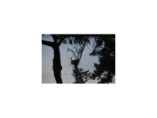 Photo 8: 731 ENGLISH BLUFF Road in Tsawwassen: English Bluff House for sale : MLS®# V1055207
