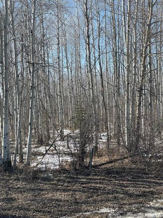 Photo 12: 65 acres land in Preeceville: Lot/Land for sale : MLS®# SK848653