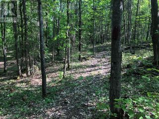 Photo 14: N/A RANEY Road E in Sundridge: Vacant Land for sale : MLS®# 40129602