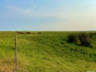 Photo 34: Unvoas Farm in Swift Current: Farm for sale (Swift Current Rm No. 137)  : MLS®# SK864766