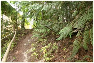 Photo 14: Lot 49 Forest Drive: Blind Bay Vacant Land for sale (Shuswap Lake)  : MLS®# 10217653