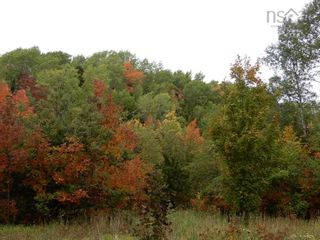 Photo 9: Tanner Hill Road in Limerock: 108-Rural Pictou County Vacant Land for sale (Northern Region)  : MLS®# 202121301