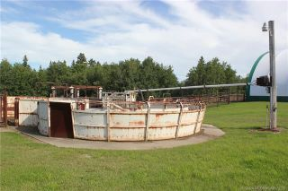 Photo 47: 41405 Range Road 231: Rural Lacombe County Detached for sale : MLS®# CA0173239