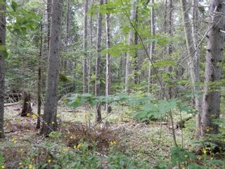 Photo 1: Pictou Landing Road in Pictou Landing: 108-Rural Pictou County Vacant Land for sale (Northern Region)  : MLS®# 202118664