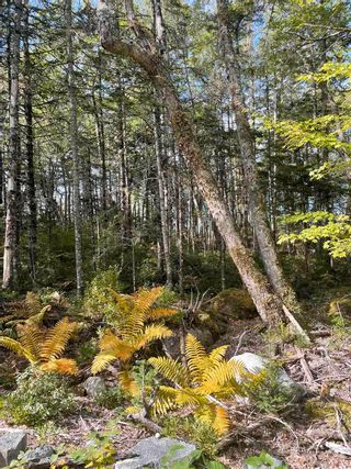 Photo 7: Lot 3 103 Highway in Birchtown: 407-Shelburne County Vacant Land for sale (South Shore)  : MLS®# 202125569