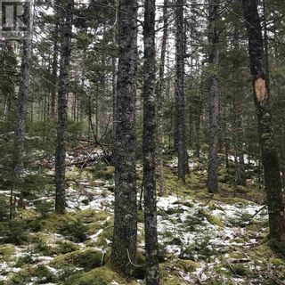 Photo 1: Lot 14 Tupper Lake in Westfield: Vacant Land for sale : MLS®# 202110832