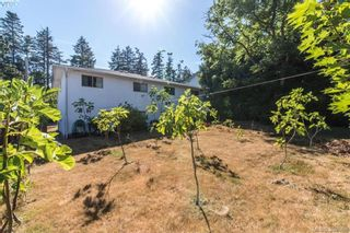 Photo 5: 1174 Craigflower Rd in VICTORIA: Es Kinsmen Park Full Duplex for sale (Esquimalt)  : MLS®# 769477
