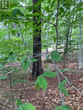 Photo 3: Lot Gulch Road in Labelle: Vacant Land for sale : MLS®# 202120717
