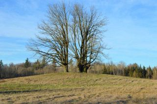 Photo 4: 30169 MARSHALL ROAD in Abbotsford: Abbotsford West Land for sale : MLS®# R2000064