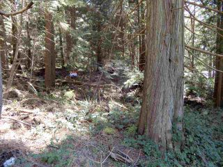 "Photo 1: LOT 2 FORIN ROAD: Keats Island Land for sale in ""EASTBOURNE"" (Sunshine Coast)  : MLS®# R2533864"