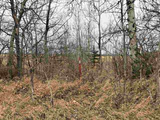 Photo 24: TWP RD 583 Range Rd 271: Rural Westlock County Rural Land/Vacant Lot for sale : MLS®# E4218433