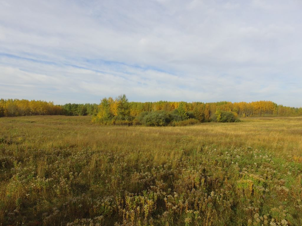 Photo 3: Photos: N1/2 SE19-57-1-W5: Rural Barrhead County Rural Land/Vacant Lot for sale : MLS®# E4217154