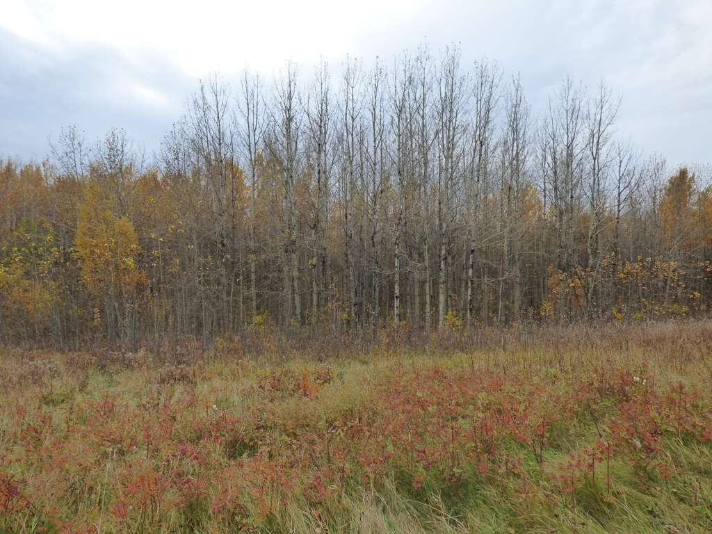 Photo 25: Photos: N1/2 SE19-57-1-W5: Rural Barrhead County Rural Land/Vacant Lot for sale : MLS®# E4217154