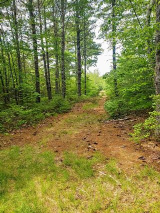 Photo 5: Lot 101 Dorey Mills Road in Clearland: 405-Lunenburg County Vacant Land for sale (South Shore)  : MLS®# 202119645