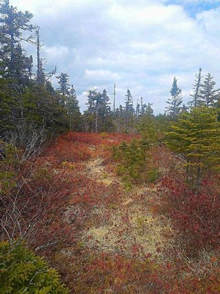 Photo 5: 0 Louisbourg Highway in Louisbourg: 207-C. B. County Vacant Land for sale (Cape Breton)  : MLS®# 202102405