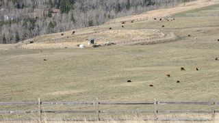 Photo 7: SE 35-20-2W5: Rural Foothills County Residential Land for sale : MLS®# A1101395