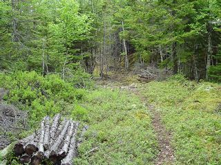 Photo 12: 0 Moshers Island Road in LaHave River: 405-Lunenburg County Vacant Land for sale (South Shore)  : MLS®# 202111805