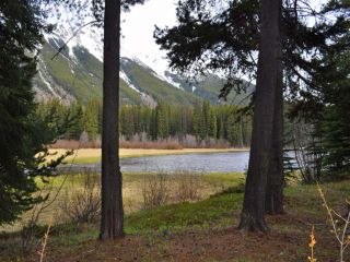 Photo 9: Mead Lake: Land for sale (Whistler)