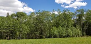 Photo 7: 5.78 Acres Parkins Road: Rural Foothills County Land for sale : MLS®# A1086953