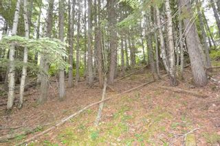 Photo 12: DL 1335A 37 Highway: Kitwanga Land for sale (Smithers And Area (Zone 54))  : MLS®# R2471833