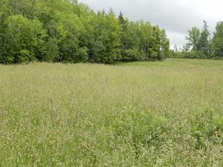 Photo 11: River John Road in Scotch Hill: 108-Rural Pictou County Vacant Land for sale (Northern Region)  : MLS®# 202115411