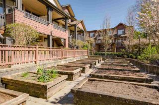 """Photo 18: 57 19478 65 Avenue in Surrey: Clayton Condo for sale in """"Sunset Grove"""" (Cloverdale)  : MLS®# R2568933"""