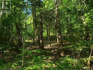 Photo 15: 8801 SEVERN RIVER in Orillia: Vacant Land for sale : MLS®# 40120545
