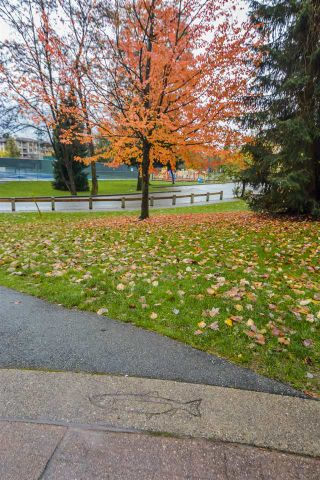 "Photo 40: 411 2495 WILSON Avenue in Port Coquitlam: Central Pt Coquitlam Condo for sale in ""Orchid Riverside Condos"" : MLS®# R2119140"