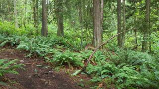 Photo 7: 14.65AC BARRETT STREET in Mission: Mission BC Land for sale : MLS®# R2079511