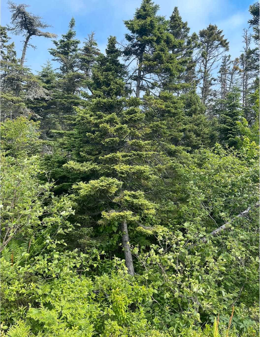 Main Photo: Lot 20 Ketch Harbour Road in Ketch Harbour: 9-Harrietsfield, Sambr And Halibut Bay Vacant Land for sale (Halifax-Dartmouth)  : MLS®# 202116566