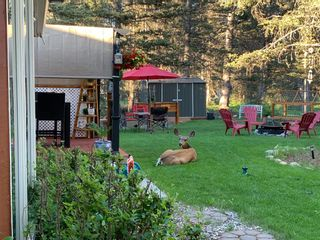 Photo 41: 48 Wolf Drive in Rural Rocky View County: Rural Rocky View MD Detached for sale : MLS®# A1126546