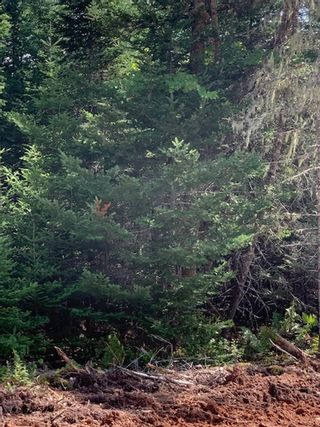 Photo 3: Lot 16 Fairway Avenue in Shubenacadie East: 105-East Hants/Colchester West Vacant Land for sale (Halifax-Dartmouth)  : MLS®# 202122117
