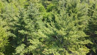 Photo 3: Lot Highway 203 in Shelburne: 407-Shelburne County Vacant Land for sale (South Shore)  : MLS®# 202114248